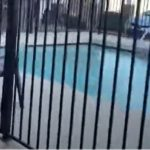 Pool fencing with a black fence in Australia